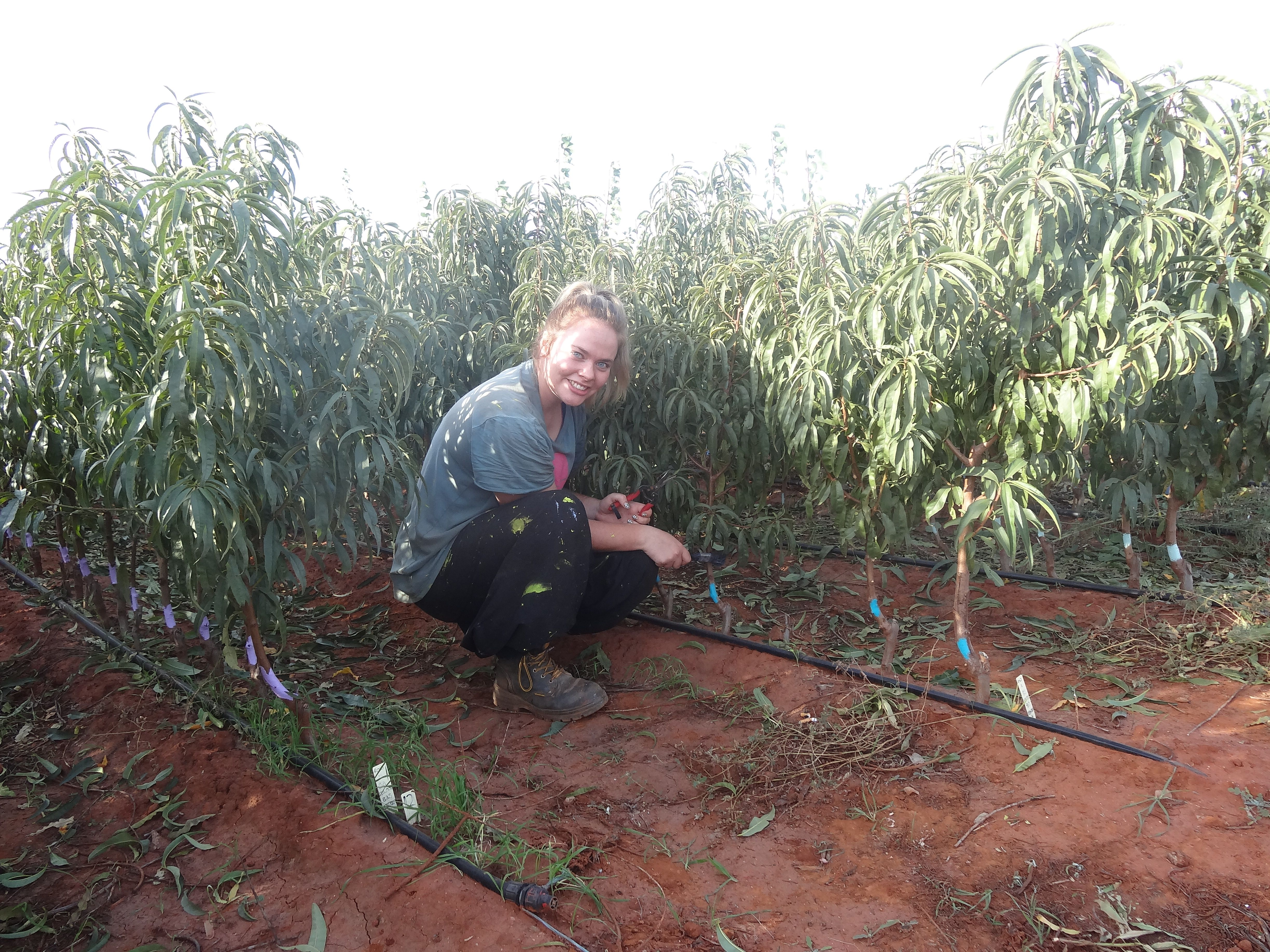 Nursery Work In Griffith NSW   Anything But Marzipan